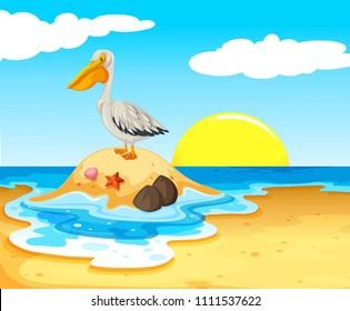 Pelican Bird on the Beach illustration
