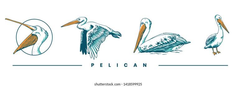 pelican bird set on illustration