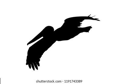 Pelican in flight silhouette
