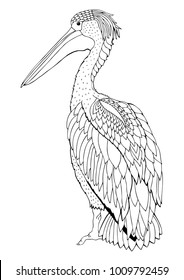 Pelican. Hand drawn bird. Sketch for anti-stress adult coloring book in zen-tangle style. Vector illustration  for coloring page, isolated on white background. Template for poster or t-shirt