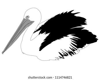 Pelican illustration monochrome