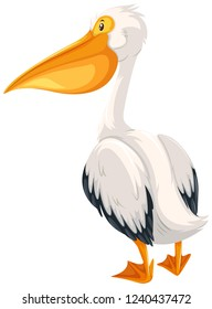 A pelican on white background illustration