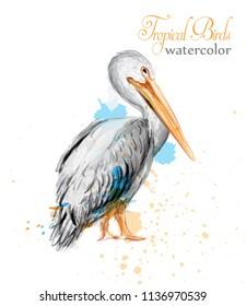 Pelican watercolor Vector. Tropic colorful birds