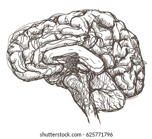 Pen sketch of a human brain. Shown in cross section lengthwise.