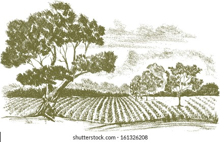 Pencil drawing of a field of crops with a tree in the foreground.