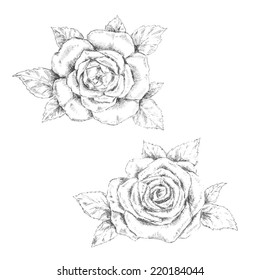 pencil sketch of the rose