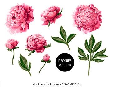 Vectores, imágenes y arte vectorial de stock sobre Tarjetas