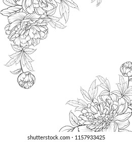 Peonies graphic line sketch. Spring bouquet of peony garland. Wedding card with flowers over white background. Vector illustration.