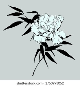 Peony flower and bamboo branch isolated on grey background. Sketch style. Line art. Tattoo art. Hand drawn illustration for floral design. For invitation, greeting cards, textile, paper and wrapping