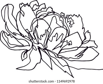 Peony flower close-up, minimalist black and white illustration of one continuous line, flora fauna, beauty, fashion, aesthetics, plants, modern art, emotional drawing.
