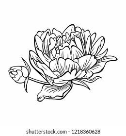 Peony flower contour. Floral vector illustration.
