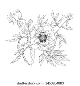 Peony flower. Element for design. Outline hand drawing vector illustration. In botanical style Isolated on white background.