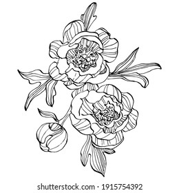 Peony flower. Floral botanical flower. Isolated illustration element. Vector hand drawing wildflower for background, texture, wrapper pattern, frame or border.