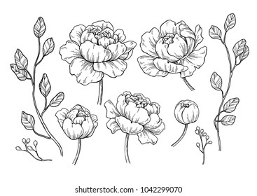 Outline Drawing Images, Stock Photos & Vectors | Shutterstock
