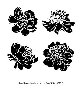 Peony flower silhouette set. Black and white flowers isolated.  Great for spring festival banners, wedding invitations, bridal shower. Vector illustration