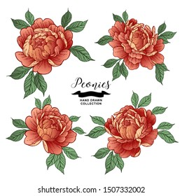 Peony flowers in japanese tattoo style. Hand drawn red flowers. Vector illustration.