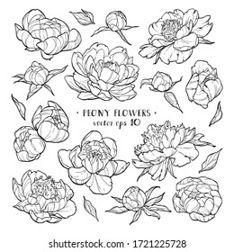 Peony flowers set 1 on white backgrounds. Vector hand drawn illustration. For invitations, tattoo, greeting cards, decor