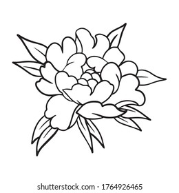 peony graphic design vector illustration, icon, logo, art sketch sketch, decoration, hand draw, use in print