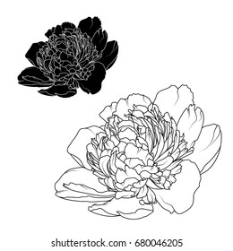 Peony rose flowers black and white contrast isolated design elements. Detailed outline sketch drawing. Botanical vector design illustration.