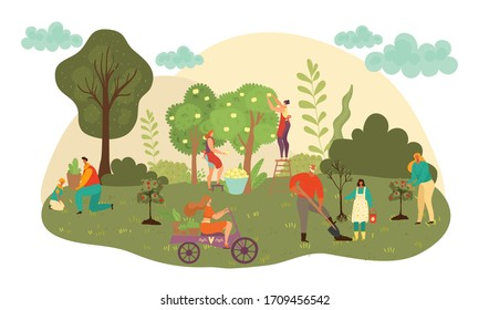 People work at autumn garden harvesting fruits crop and agriculture farming flat vector illustration. Farmers harvest fall fruits. People workers pick apples from trees in garden, caring for plants.