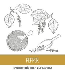 Pepper. A plant, a fruit. Bowl, scoop. Set. Sketch. Monochrome.