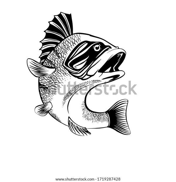 perch fish vector illustration logo symbol