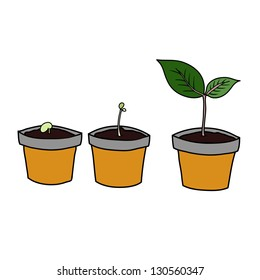 Period of plants growth in small pot