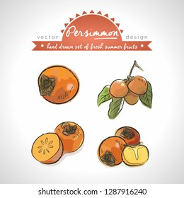 Persimmon. Hand drawn collection of vector sketch detailed fresh fruits. Isolated