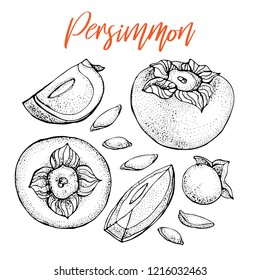 Persimmon vector drawing set. Isolated hand drawn object with Persimmon sliced piece and seeds. Fruit sketch style illustration. Detailed vegetarian food sketch