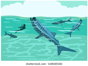 A person swims with whale sharks known as butanding in the Philippines or ca ong in Thai. It is a kind of feed carpet shark also found in many places like Maldives, Japan and more. Editable Clip Art.