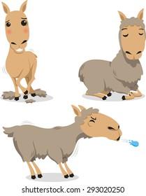 Peruvian Llama Lama Spitting and sheared for wool
