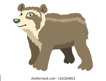 Peruvian Spectacled Bear Illustration
