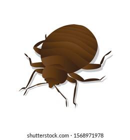 Pest bedbug bites parasite animal