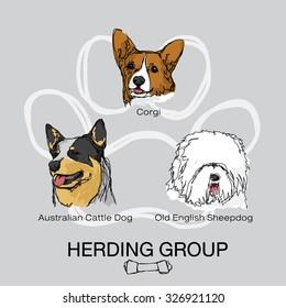 pet dog herding group pack 1, Corgi, Australian Cattle Dog, Old English Sheepdog