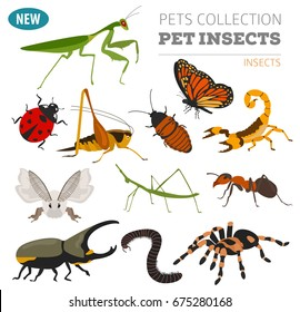 Pet insects breeds icon set flat style isolated on white. House keeping bugs, beetles, sticks, spyders and other collection. Create own infographic about pets. Vector illustration
