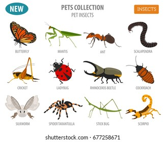 Pictures of insects and bugs with names