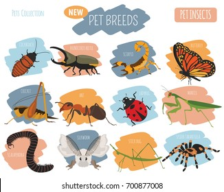 Pet insects breeds icon set flat style isolated on white. House keeping bugs, beetles, sticks, spiders and other collection. Create own infographic about pets. Vector illustration