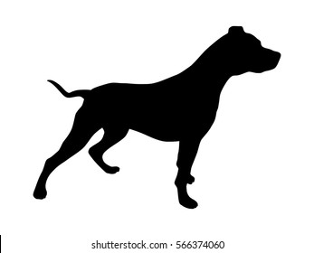 Pet pitbull / pit bull terrier dog or canine flat vector icon for animal apps and websites