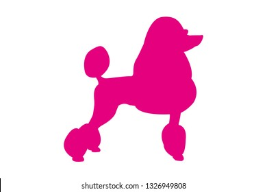 Pet silhouette. Rose isolated poodle dog