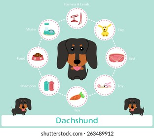 Pet Supplies (dachshund) infographic on warm background - vector set of icons and illustrations
