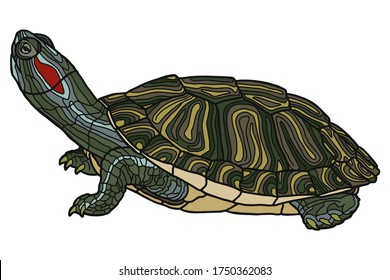 Pet turtle red-eared slider(Trachemys scripta elegans) isolated on white background.