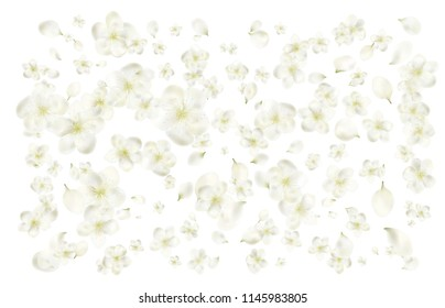 Petals and flowers of a flowering spring tree. Cherry, cherry or Apple flowers. realistic vector