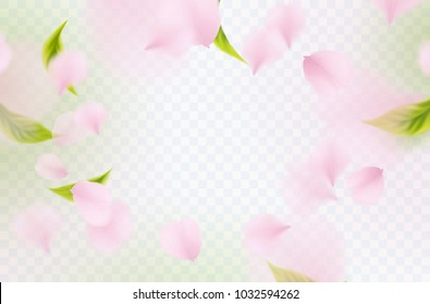 Petals of rose, green leaves isolated on transparent background. Realistic pink sakura falling petals pattern. Flying blossom cherry flower elements for spring advertising design.