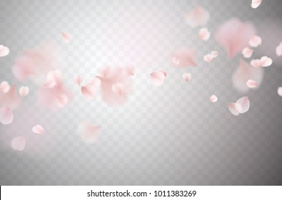 Petals of rose isolated on transparent background. Realistic pink sakura falling petals pattern. Flying blossom cherry flower elements for romantic wedding invitation design.