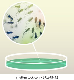 Petri Dish with Bacteria, Colony, Magnified Area  - Vector Illustration