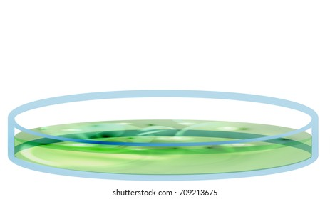 Petri Dish with Bacteria, Colony - Vector Illustration