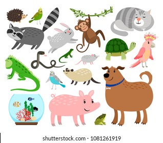 Pets animals. Cartoon home animals vector illustration for animal shop like budgie and gerbil, rabbit and snake isolated on white background