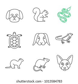 Pets linear icons set. Maltese dog, squirrel, python, tortoise, rabbit, iguana, ferret, mouse, Canadian Sphynx. Thin line contour symbols. Isolated vector outline illustrations