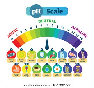 PH Acid Scale Measurement Vector Illustration Diagram with Acidic, Neutral and Alkaline example icons. Acidic levels chart.