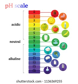 pH scale diagram with corresponding acidic or alkaline values for common substances, food, household chemicals . Litmus paper color chart. Colorful flat vector illustration on white background.